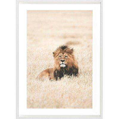 Kader lion king