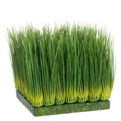 Grassen vierkant l