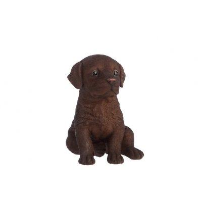 Labrador donkerbruin