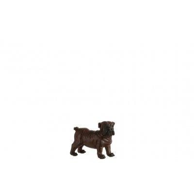 Bulldog bruin s
