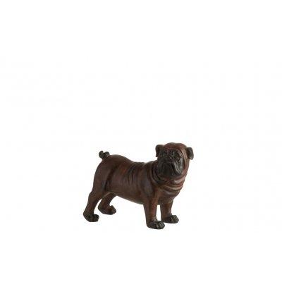 Bulldog bruin m