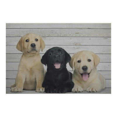 Binnenmat puppies labrador