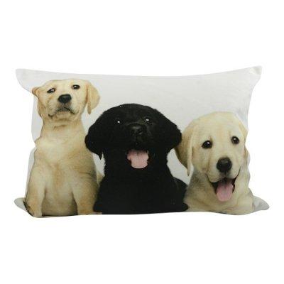 Kussen puppies labrador