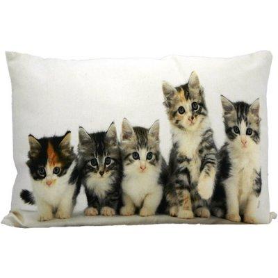 Kussen katten