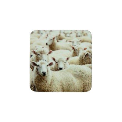 Onderzetter schapen