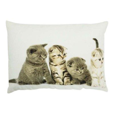Kussen kittens