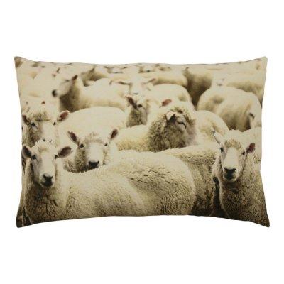 Kussen schapen