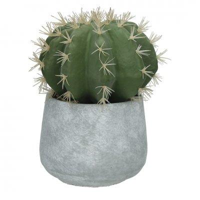 Cactus in cementen pot groen