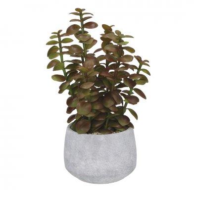 Vetplant in pot